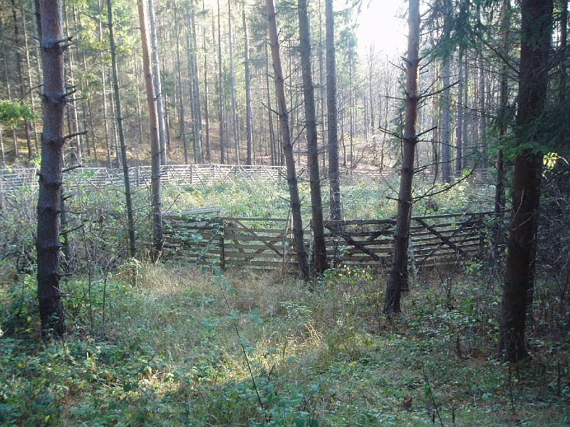 """Oplocený kotlík po nahodilé těžbě v borové monokultuře středního věku na bývalé """"zetce""""."""