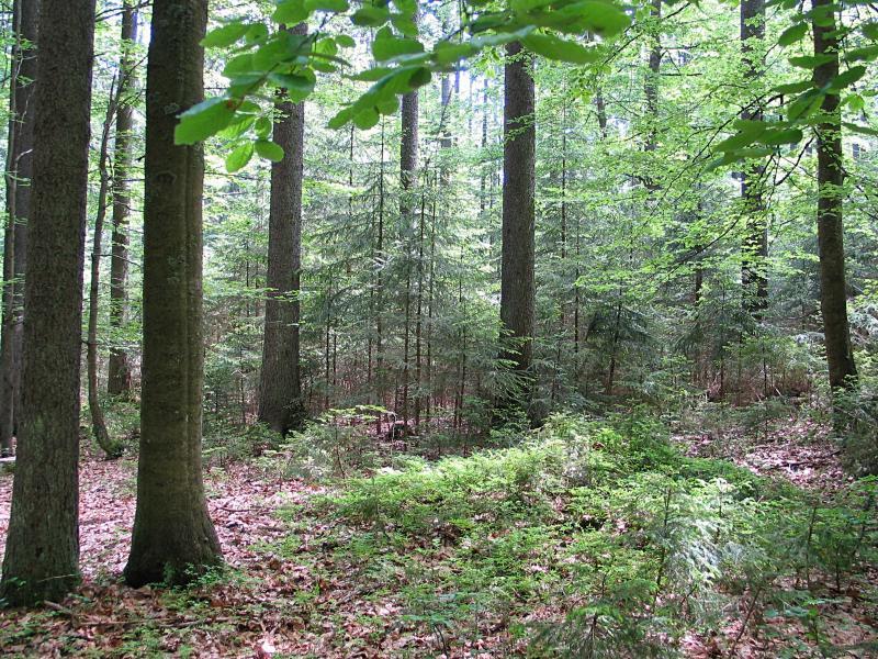 Zde to všechno začíná a končí: v uplatnění přírodního výběru v zástinu (Schlägl).